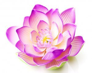 lotus flower symbol in yoga